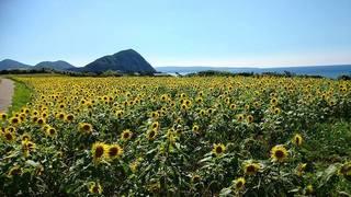 【ふるさと納税でかなうコト/五島市】五島の豊かな自然と、独自の歴史を後世に残したい!