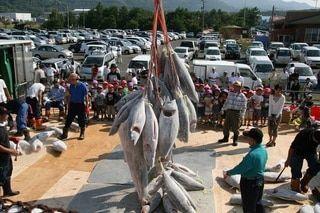 東シナ海に面したまぐろの町「いちき串木野」の活気を再び!~鹿児島県いちき串木野市